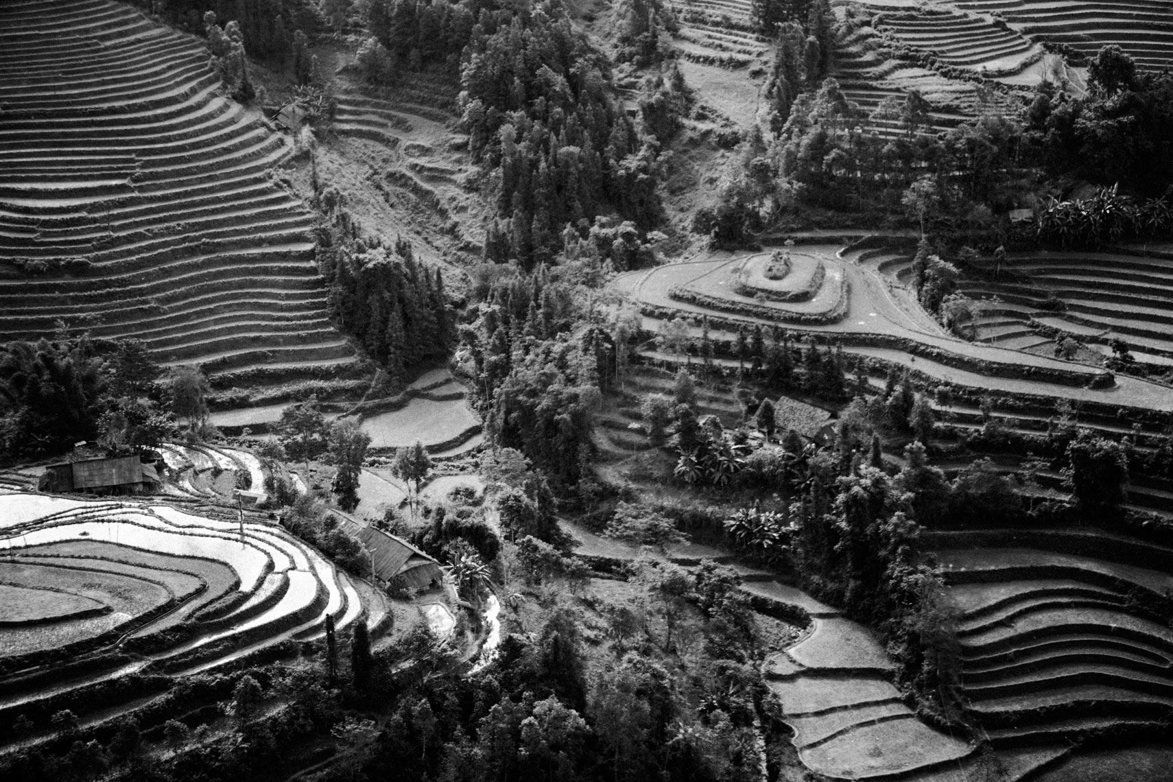 rice-paddies-bac-ha